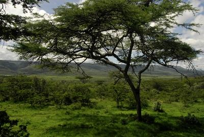 Beautiful view of Kenyan scenery