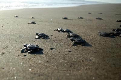 Turtles released into the ocean in Mexico