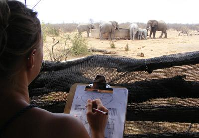 Conservation volunteer in Africa logging findings in the Savannah