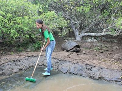 A volunteer cleaning the pond at the tortoise breeding centre, Galapagos