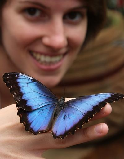 Blue Morpho butterfly rests on the hand of a volunteer