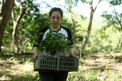 A volunteer in Costa Rica helps with reforestation efforts