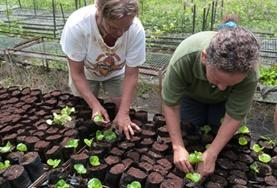 Two older volunteers tend to seedlings in a tree nursery to help with reforestation efforts on our Conservation & Community Grown-up Special in Ecuador.