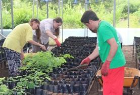 High School Special volunteers take care of seedlings at a tree nursery at the Care & Conservation placement in Ecuador.