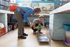 An Animal Care volunteer cares for birds on her placement in Bolivia