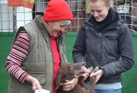 Animal Care volunteers play with a dog at a placement in Romania